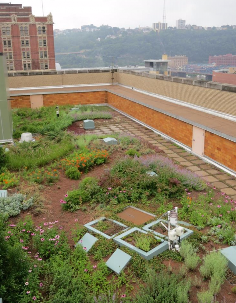 Green roof installation site